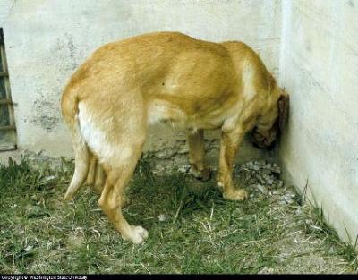 canine seizures
