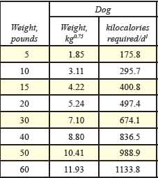 dog calorie requirements