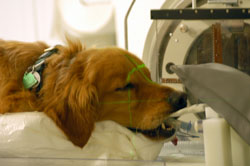 dog cancer treatment