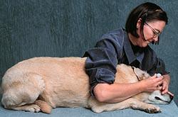 dog eye medicine