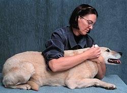 home remedies dog ear mites