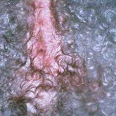 photos of dog skin rashes