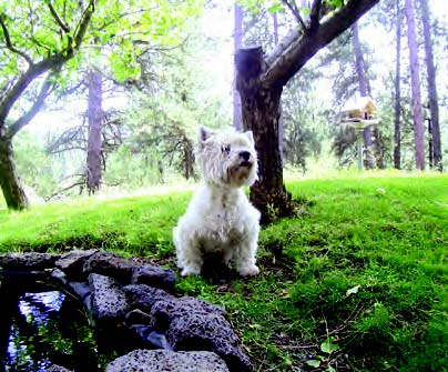 older dog health problems