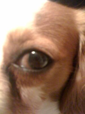 Dog's Bad Eye: View 1