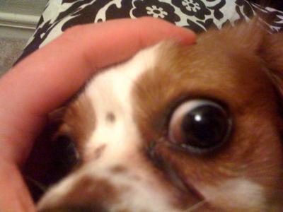 Dog's Bad Eye: View 3