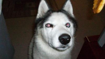 Dog Eye Dislocation