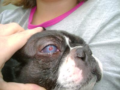 Picture Dog Eye with Red Dot