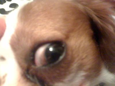 Dog's Bad Eye: View 2